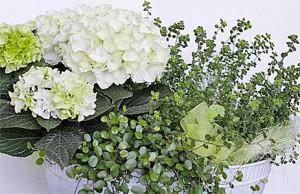 Ilkon Kukka - Kukat arkeen ja juhlaan
