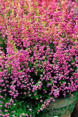 Ilkon Kukka - Kangasala