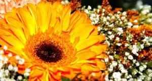 Meiltä kukat arkeen ja juhlaan - Ilkon Kukka - Kangasala