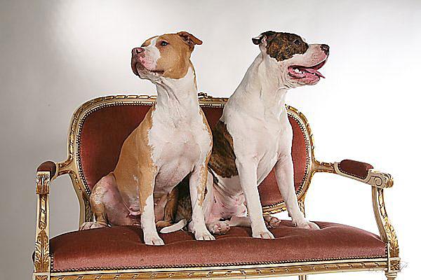 TopTassut Kangasala - meiltä koiratarvikkeet